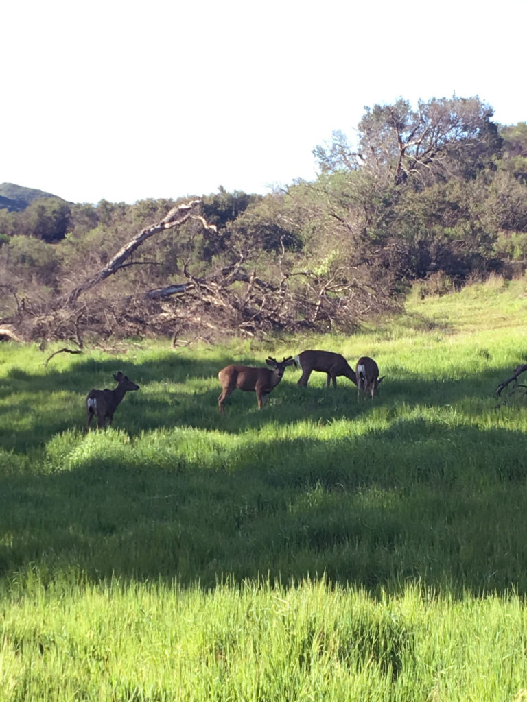 king gillette ranch hike deer