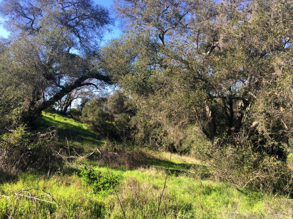 king gillette ranch hillside