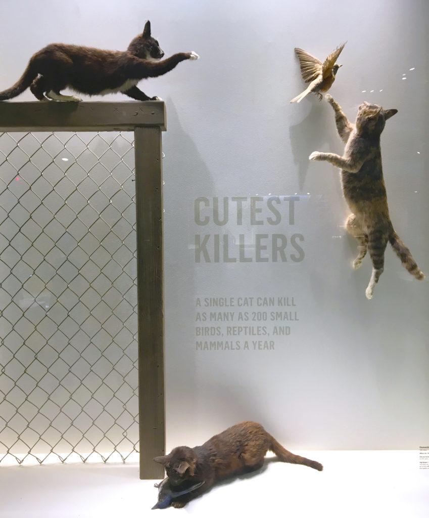 killer housecat display