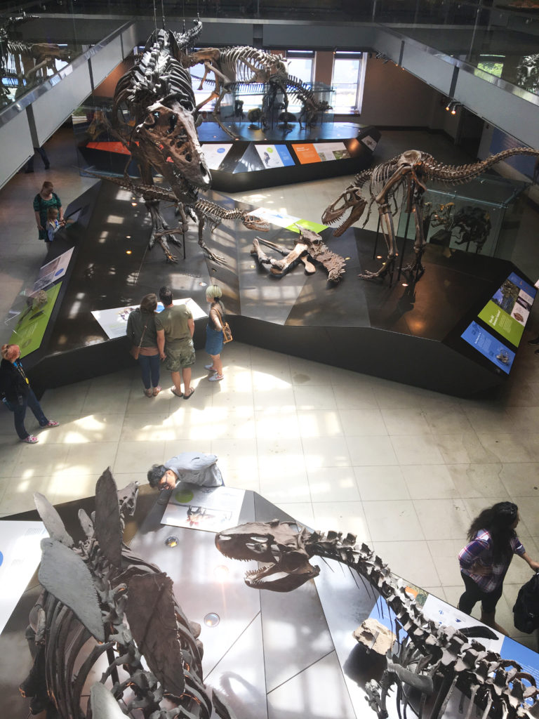 dino fossils from above
