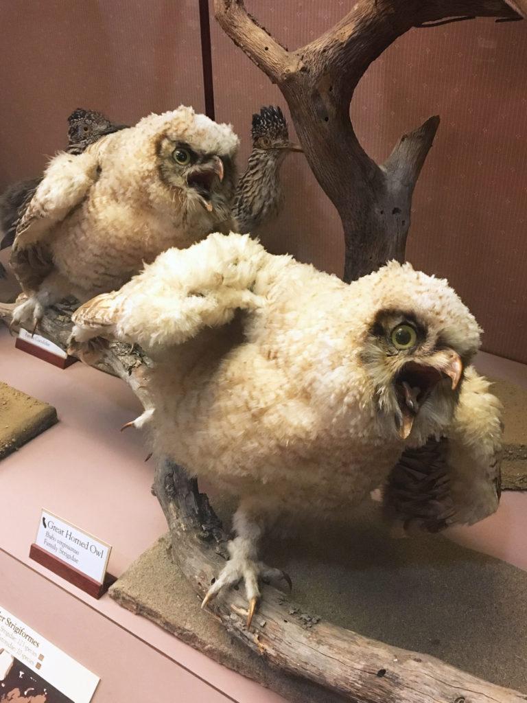 stuffed great horned owls