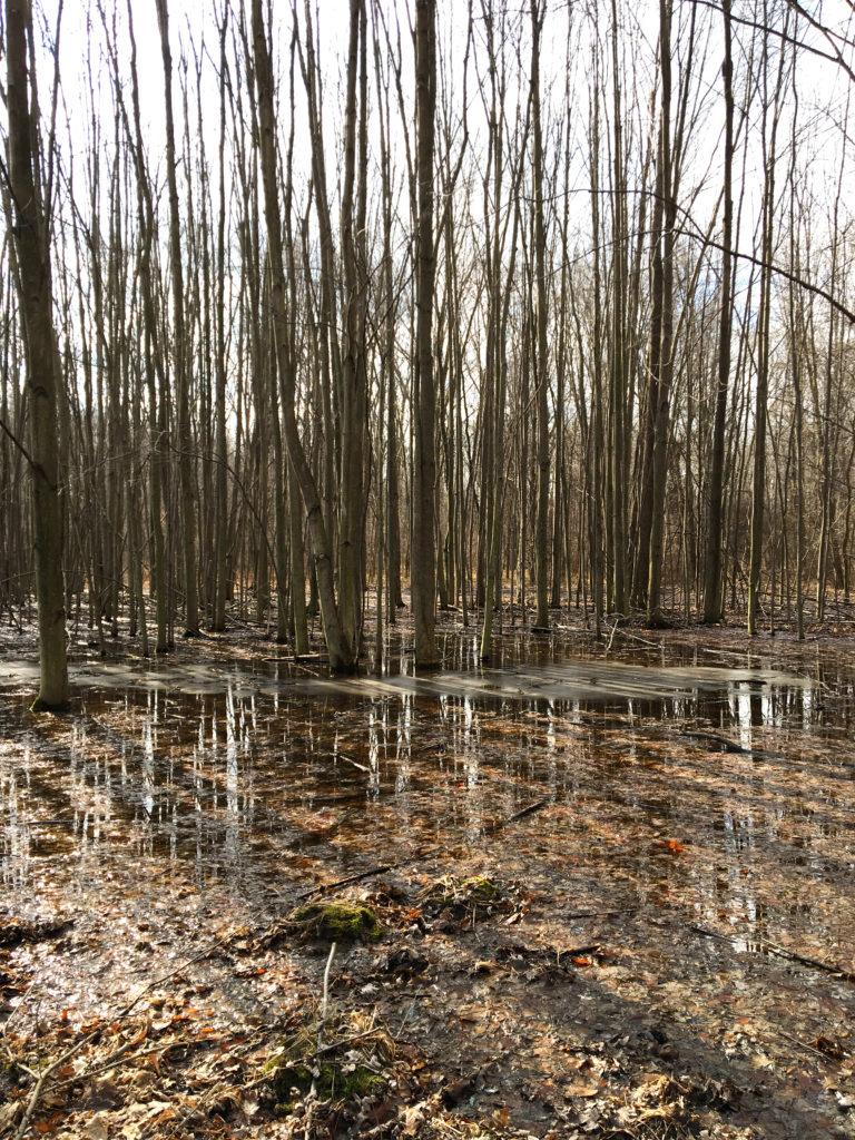 rit swamp