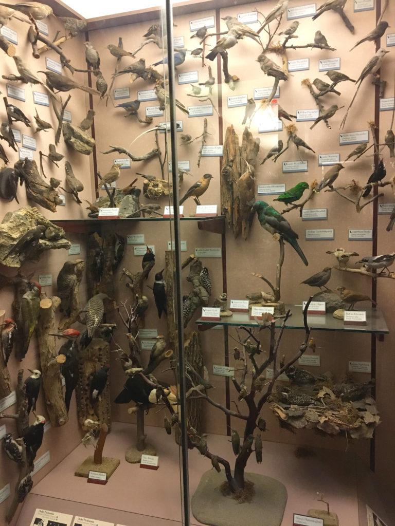 wall of taxidermy birds